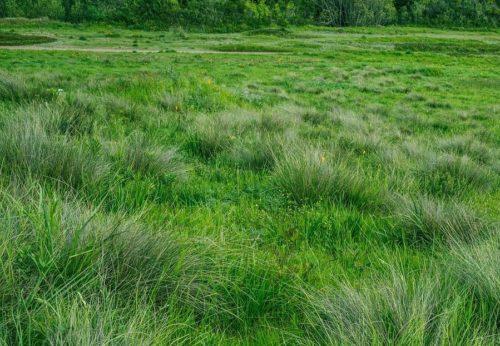A field of green grass